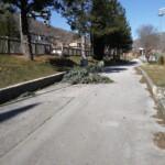 Mal tempo e forte vento, cade un albero nel campo sportivo di Civitella Roveto