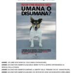 """Giro di vite per chi non sa gestire bene il proprio cane, ad Aielli Scatta la """"terapia"""" di 50€ al giorno per tutti i giorni"""