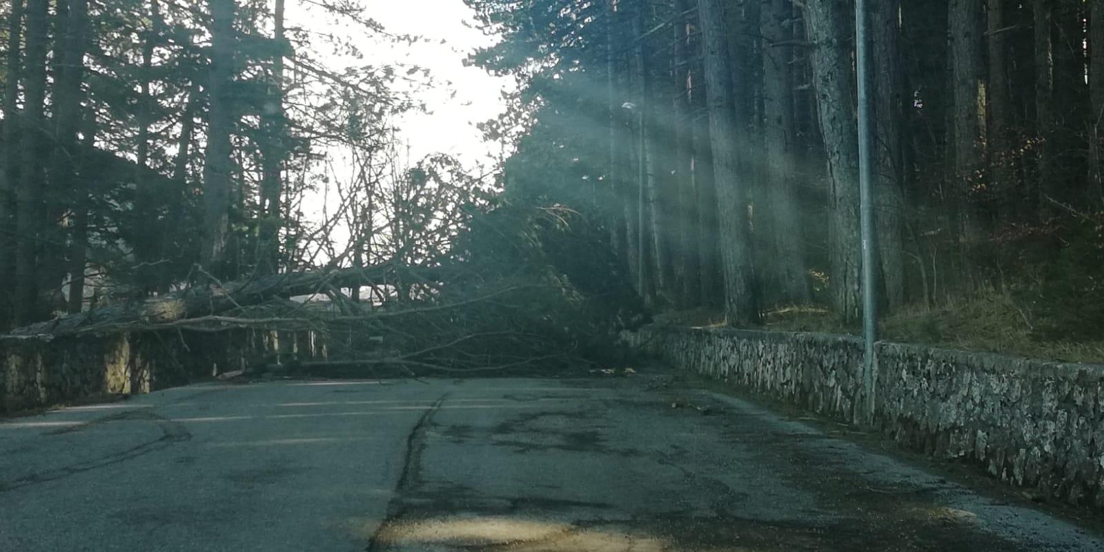 Vento forte ad Ovindoli, due alberi caduti   il sindaco raccomanda di non uscire o limitare le uscite dalle proprie abitazioni fino a cessata emergenza