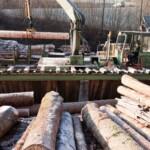 Il patrimonio boschivo della Valle Roveto, risorsa primaria di una filiera industriale che pone le buone pratiche di pianificazione territoriale al centro del business