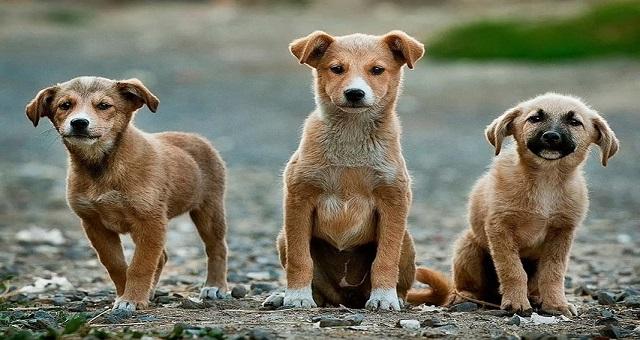 "Lotta randagismo Asl ""salto di qualità nel 2019. Affidi raddoppiati, quasi 1.000 cani catturati, identificati 755 in più"""