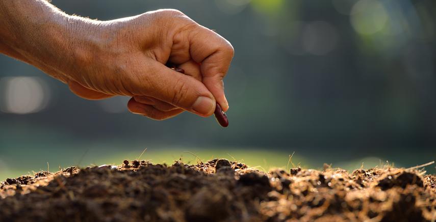 Tipi di semi di cannabis legale e come sceglierli