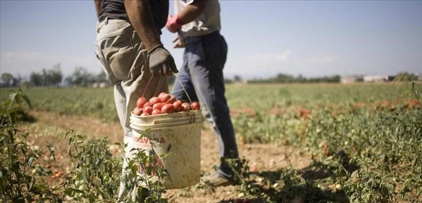 """Fase 2 Coldiretti: """"Riapertura delle frontiere Ue salverà anche i raccolti delle campagne abruzzesi. Attesi 3500 lavoratori nel Fucino"""""""