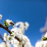 Fotografi come i poeti, hanno il potere di ricordarci che la primavera arriva a prescindere da tutto