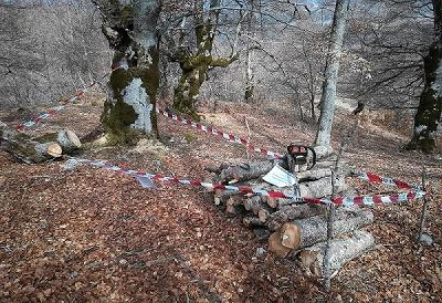 Denunciati per taglio abusivo di alberi e per la violazione delle norme anti corona virus