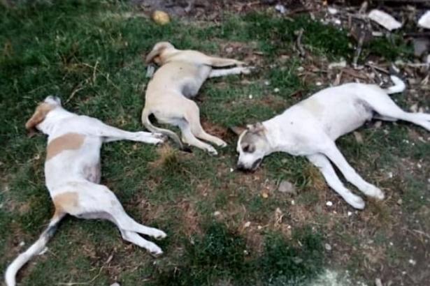 Avezzano, strage di cani avvelenati: segnalati cani morti in strada