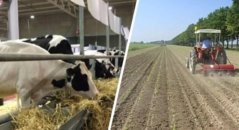 """Santangelo """"Incentivare il consumo agricolo e zootecnico locale"""""""