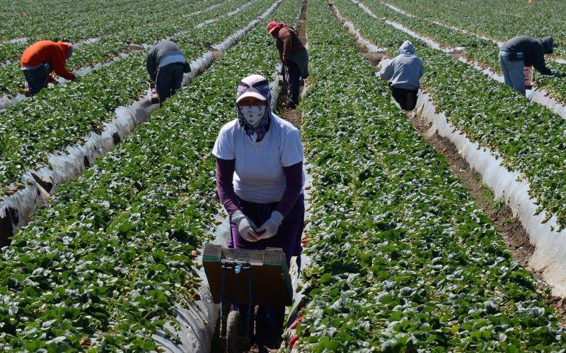 Il FIMIAV ha consegnato le prime 7.000 mascherine destinateai lavoratori dell'agricoltura