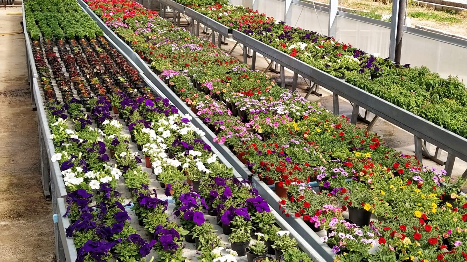 """""""A. Serpieri"""" non si ferma! riavviata la vendita di piante da fiore, di vini e di prodotti orticoli"""