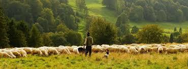"""Coronavirus, Coldiretti """"Trecento chili di agnello per i poveri abruzzesi"""""""