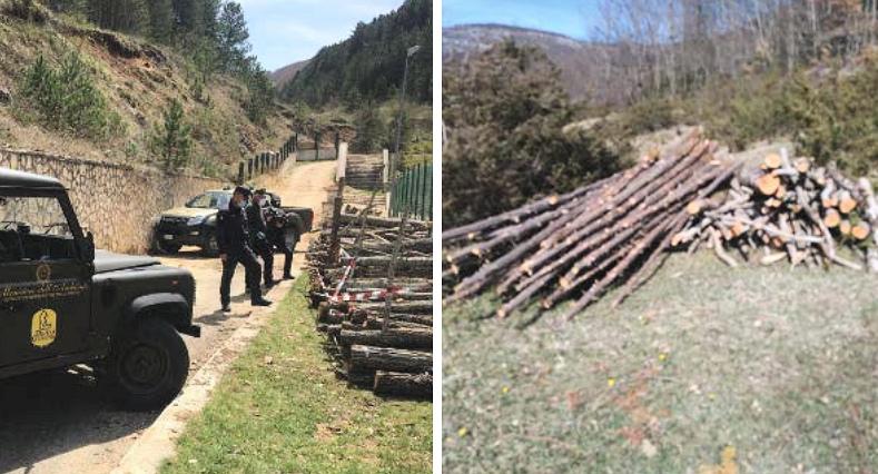 Tagliavano legna senza autorizzazione nel territorio del parco, denunciati due uomini