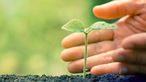 Packaging sostenibile, la soluzione adatta per ridurre i prezzi e rispettare l'ambiente
