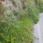 """Degrado lungo la Via del Salviano, """"Non trascuriamo questo luogo così importante per l'ambiente e per gli avezzanesi"""""""