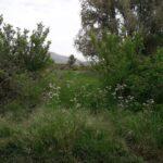 Lupo nelle campagne di San Benedetto dei Marsi, le reazioni degli abitanti