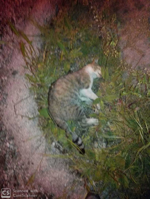 Celano, bocconi avvelenati: strage di gatti nel rione Crocifisso