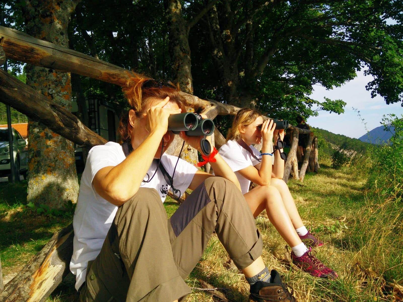 Proteggere l'Orso Bruno Marsicano. Il WWF cerca volontari per attività di tutela in Abruzzo