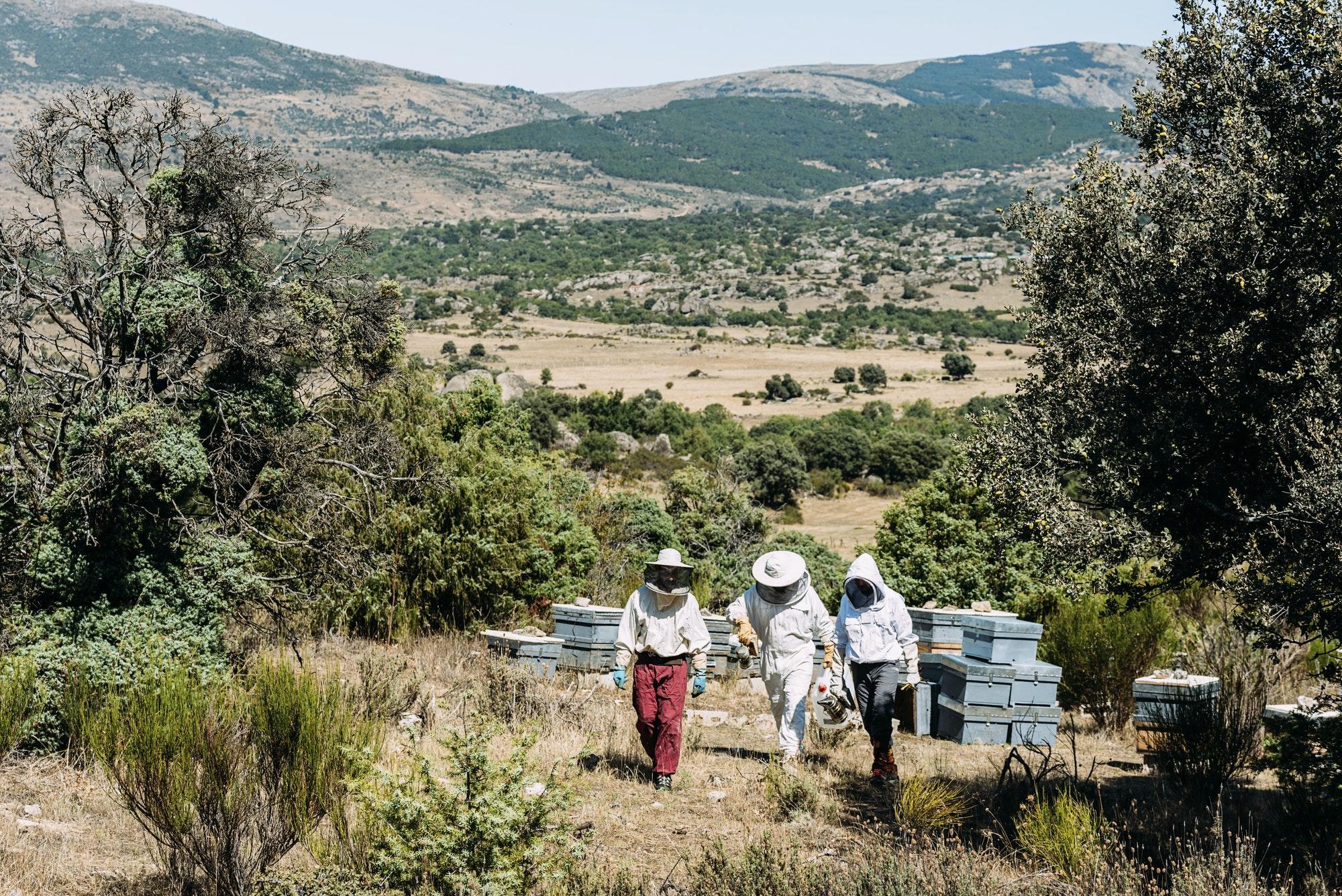 Beekeepers working collect honey.