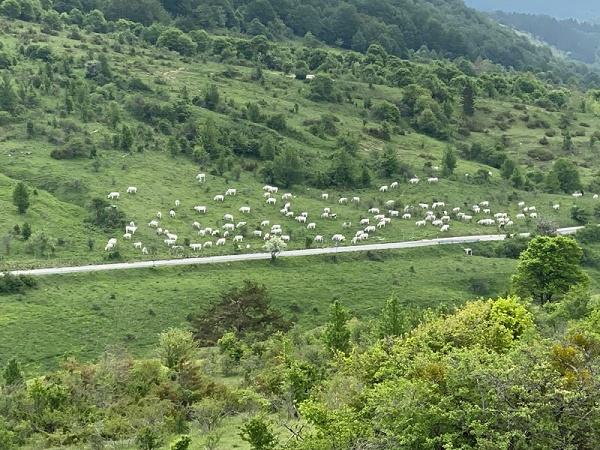 Pascolo abusivo nel territorio del Parco, i Carabinieri Forestali denunciano e multano un uomo