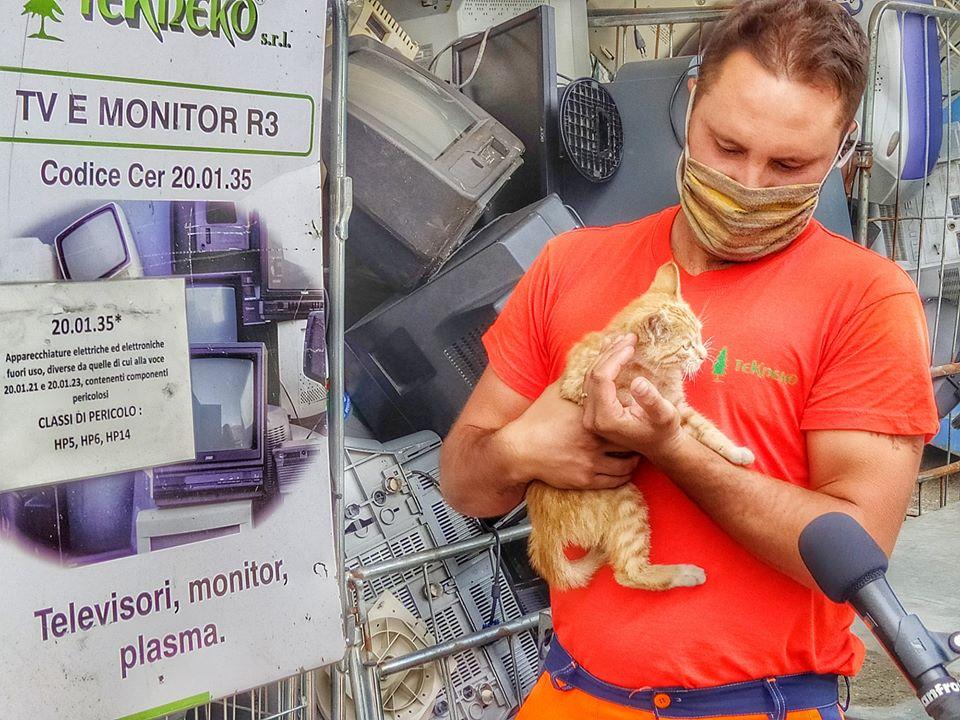 """""""Monitor"""", il gattino adottato dalla Tekneko"""