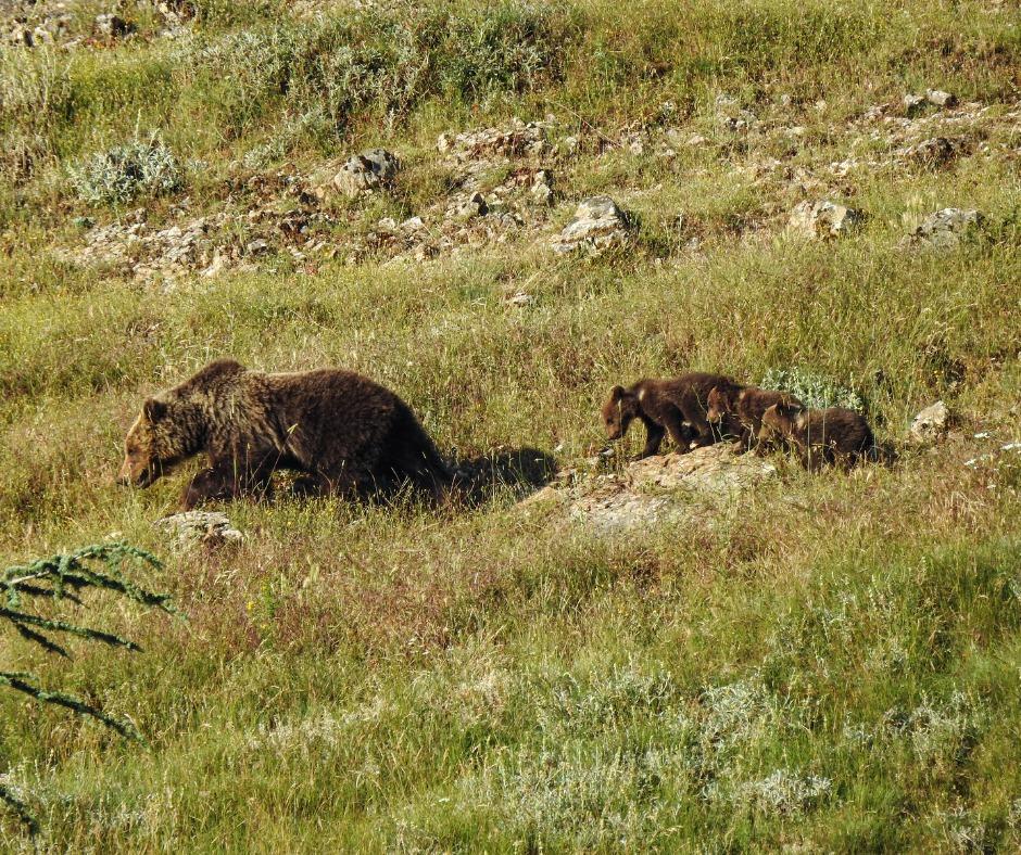 PNALM, il Sindaco di Villalago chiude le strade ai visitatori per garantire le migliori condizioni di sicurezza e tranquillità degli orsi