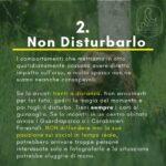 Azioni quotidiane su come comportarsi con l'Orso Bruno Marsicano