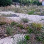 """Degrado vecchia Chiesa di San Bartolomeo. Archeoclub Marsica: """"Triste vedere l'unico sito archeologico di Avezzano ridotto in questo stato"""""""