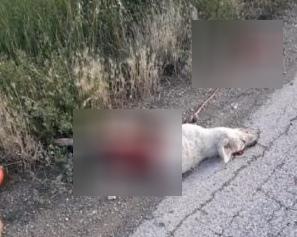 Macabro ritrovamento, carcassa di cane sventrato trovato a bordo strada