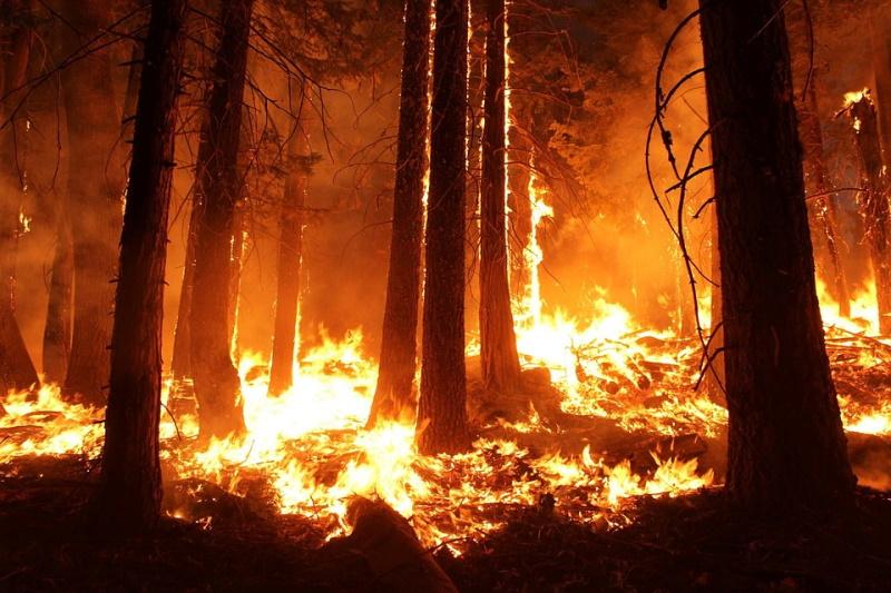 Approvate le misure di prevenzione rischio incendi boschivi dal Comune di Collelongo