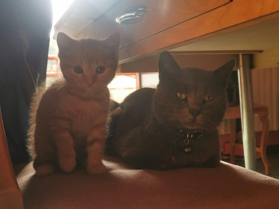 Alla ricerca di Lucky, appello dei proprietari per un gatto smarrito a Lecce nei Marsi