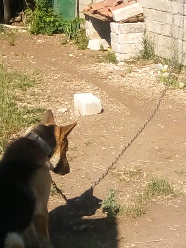 Cane legato lasciato sotto al sole, interviene la polizia locale