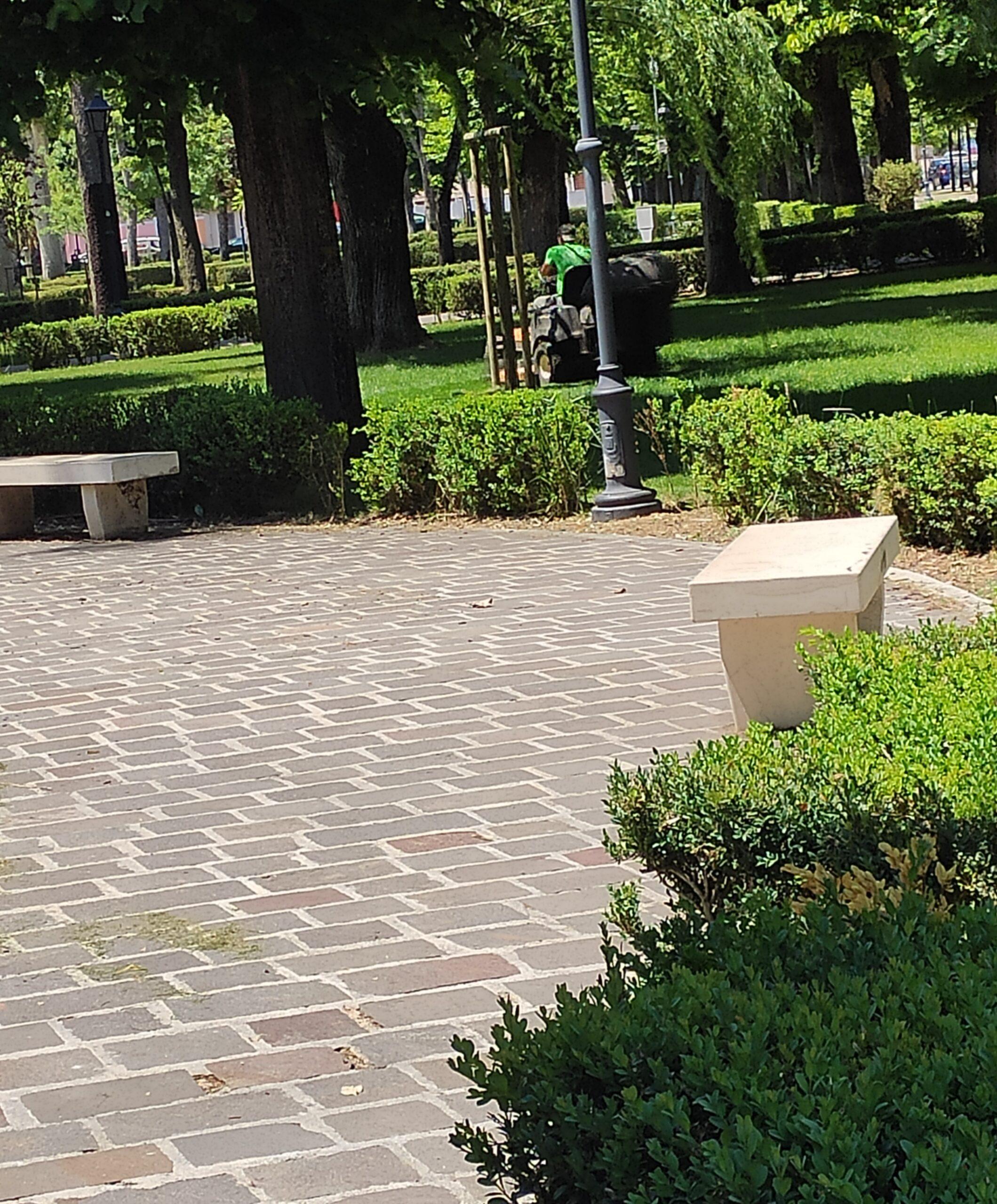 Manutenzione verde urbano ad Avezzano, operazioni di potatura e pulizia in pineta ed a piazza Torlonia