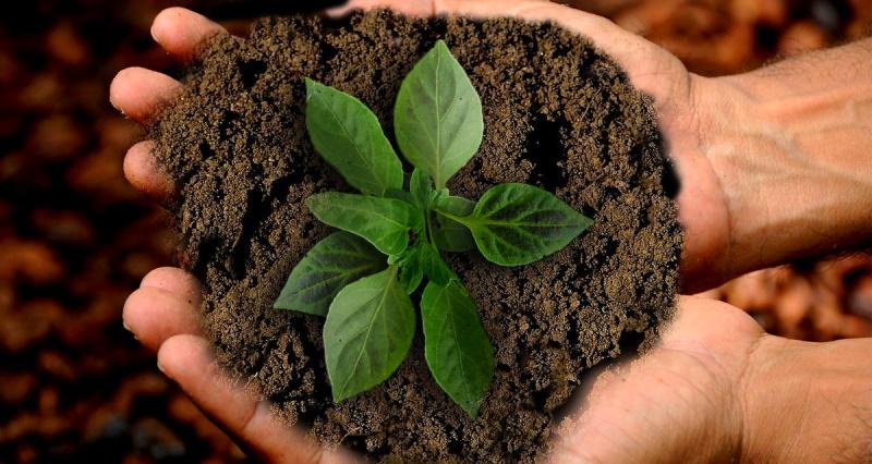 Feder.Agri Marsica: ripartire dall'agricoltura sociale con sostegno alle zone pedemontane e progetti per la collettività
