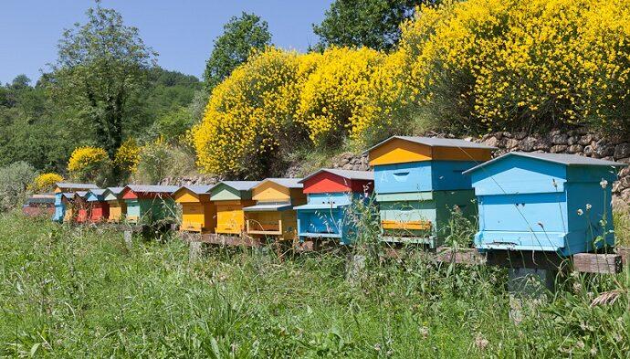 """Al via le adesioniper il Concorso """"miglior miele dei Parchi d'Abruzzo"""""""