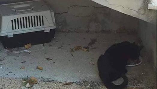 Gatto abbandonato con tutto il trasportino in zona San Rocco ad Avezzano