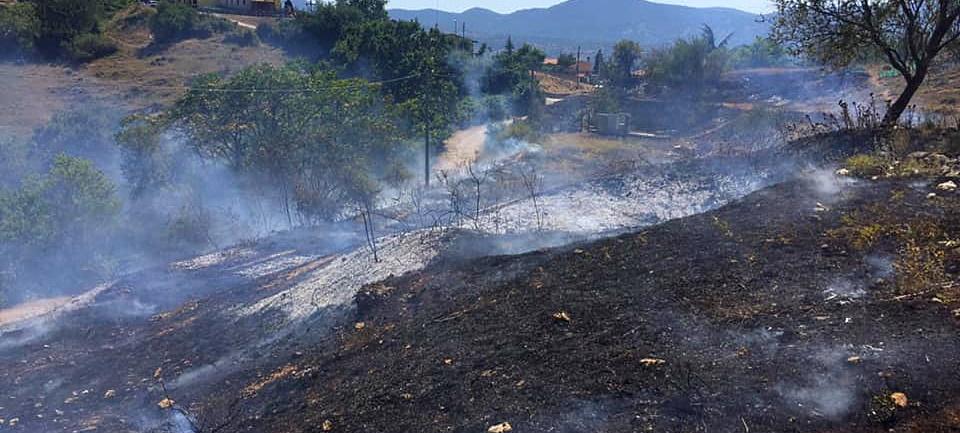La pineta di Poggio Filippo minacciata da un incendio