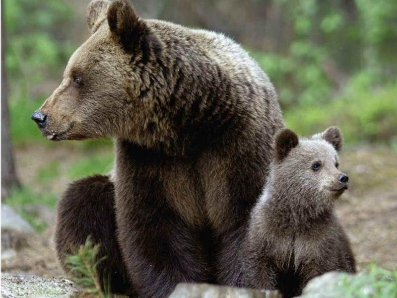Progetto Life Safe Crossing, un sistema di prevenzione a tutela della fauna selvatica sarà installato al Parco Nazionale D'Abruzzo