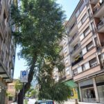 Si spezza un grosso ramo e sfiora un'auto lungo via Corradini ad Avezzano