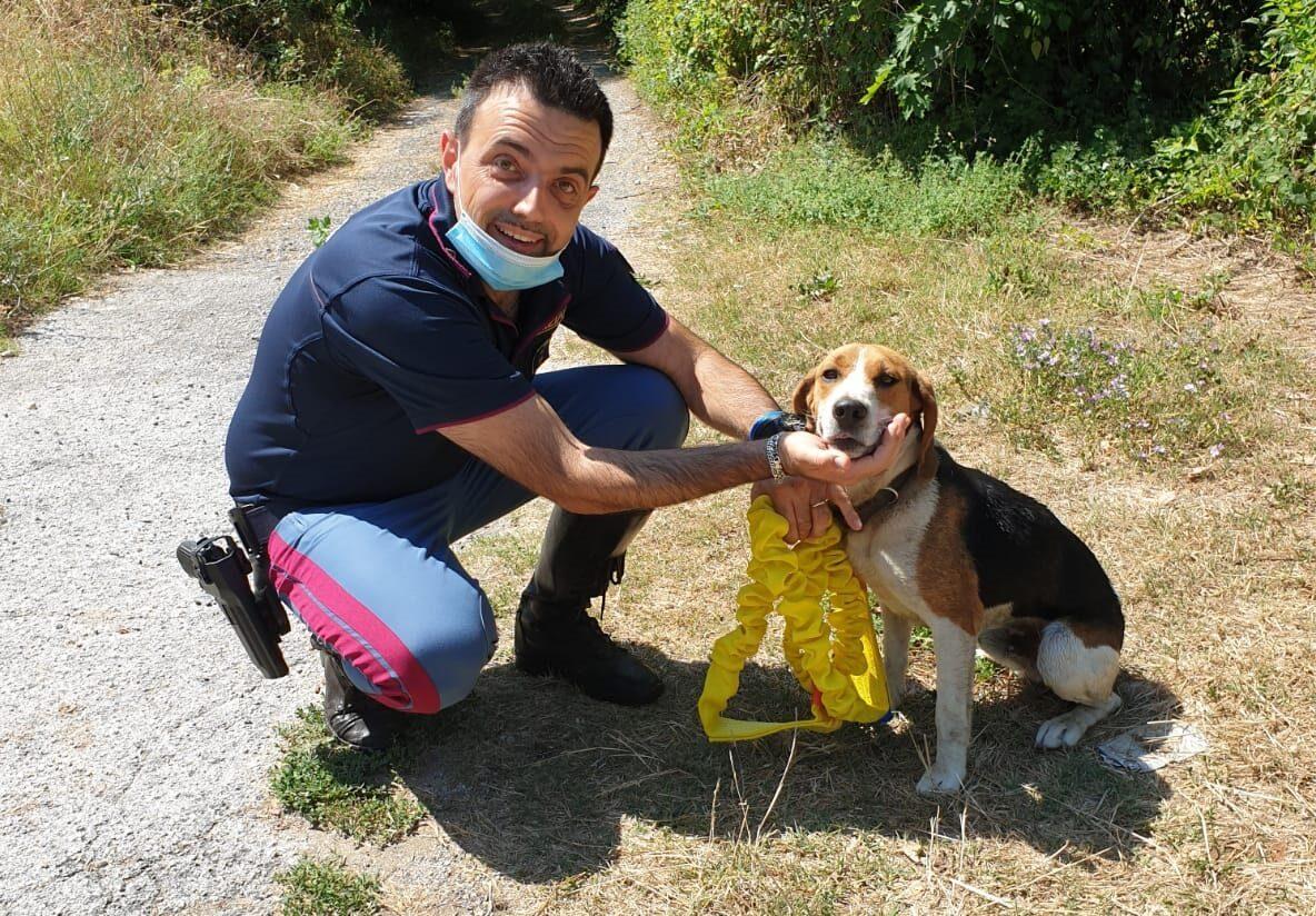 La Polizia Di Stato salva un cucciolo di beagle