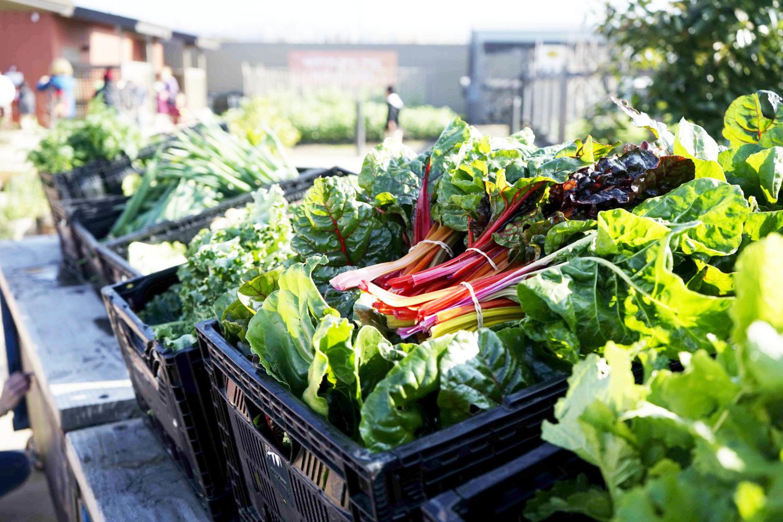 40 quintali di ortaggi donati dagli agricoltori fucensi alla Diocesi di Avezzano