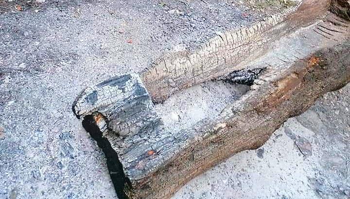 Bruciato uno dei tronchi della fonte Longagna di Luco dei Marsi
