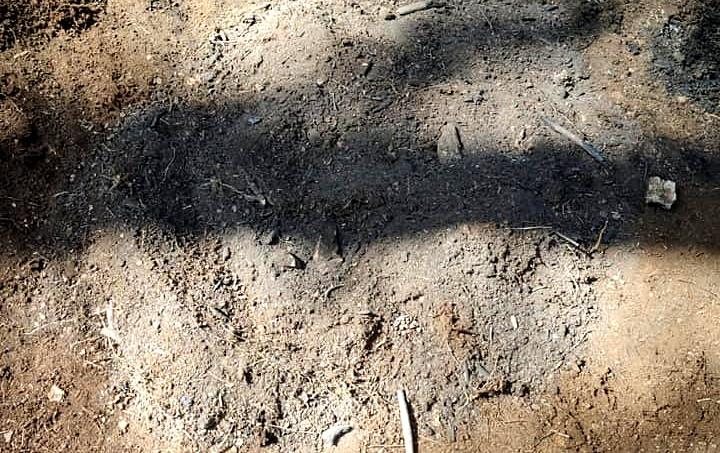 Spento dai Vigili del Fuoco un principio di incendio nella pineta di Tagliacozzo