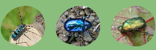 I Dominatori della Terra: alla scoperta degli insetti del Parco Nazionale