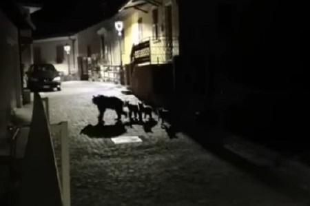 L'orsa Amarena e i suoi quattro cuccioli a spasso per i vicoli di San Sebastiano dei Marsi