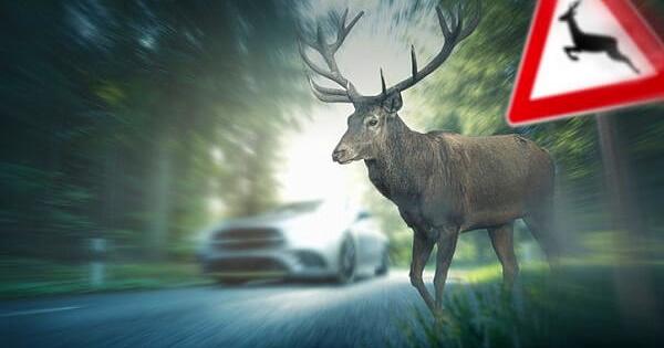 Incidenti stradali causati da animali selvatici nel territorio provinciale, riunione in Prefettura
