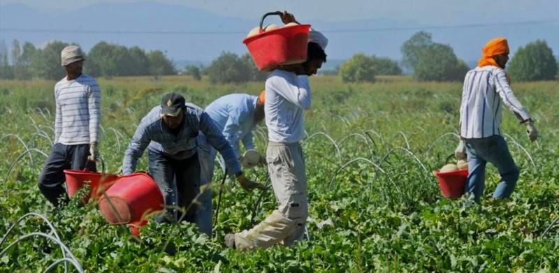 Caporalato e sfruttamento del lavoro in agricoltura, sottoscritto protocollo d'intesa al Viminale