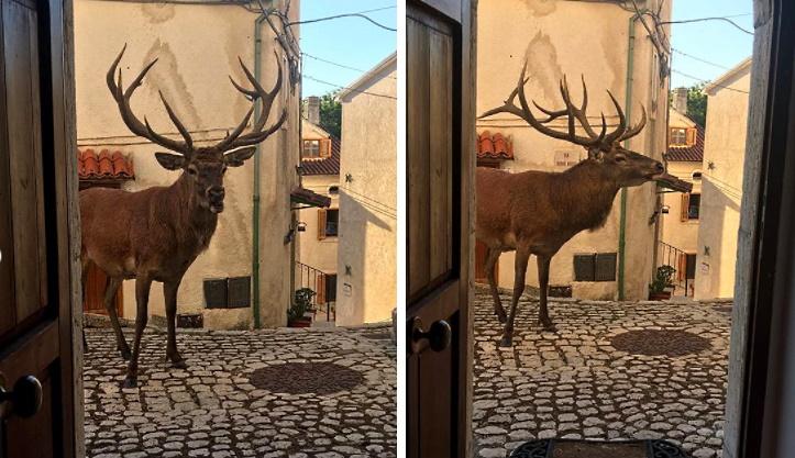 Apre la porta di casa e si ritrova davanti un cervo