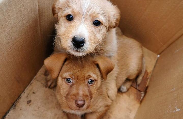 Due cuccioli abbandonati per strada in uno scatolone