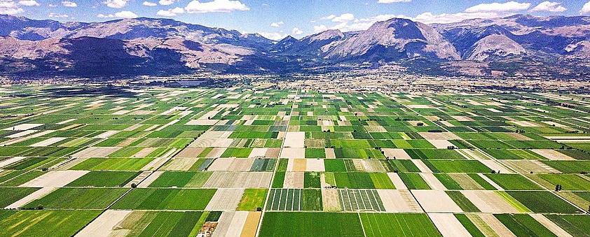 """Feder.agri Marsica al fianco dei produttori agricoli: """"servono misure di sostegno e rilancio del settore"""""""