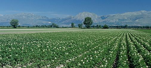 Incontro in Prefettura per il Fucino: adesione alla Rete Agricola di Qualità e Tavolo di confronto permanente