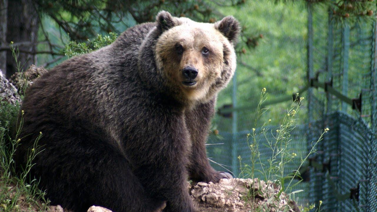 Chiuso il Sentiero Z4 per tutelare l'orso marsicano durante il periodo di iperfagia autunnale
